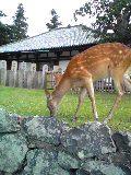 奈良に来ました!